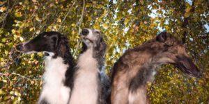 tanzende, springende, liegende Hunde, Wesen, Kreaturen, Biester, Bestien